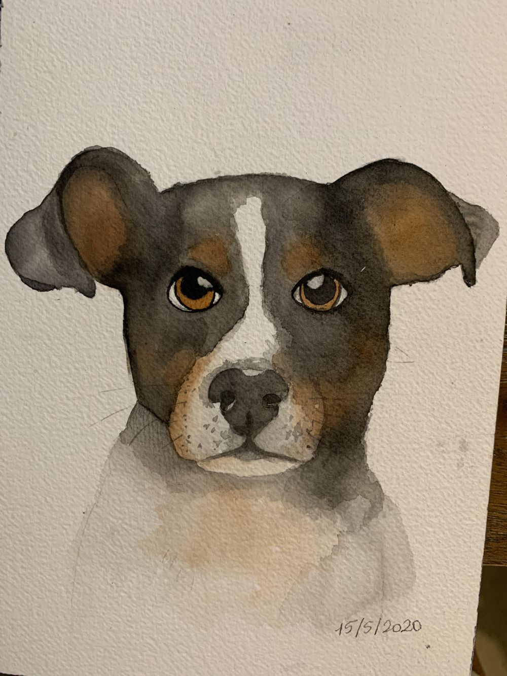 my dogs portraits - image 1 - student project