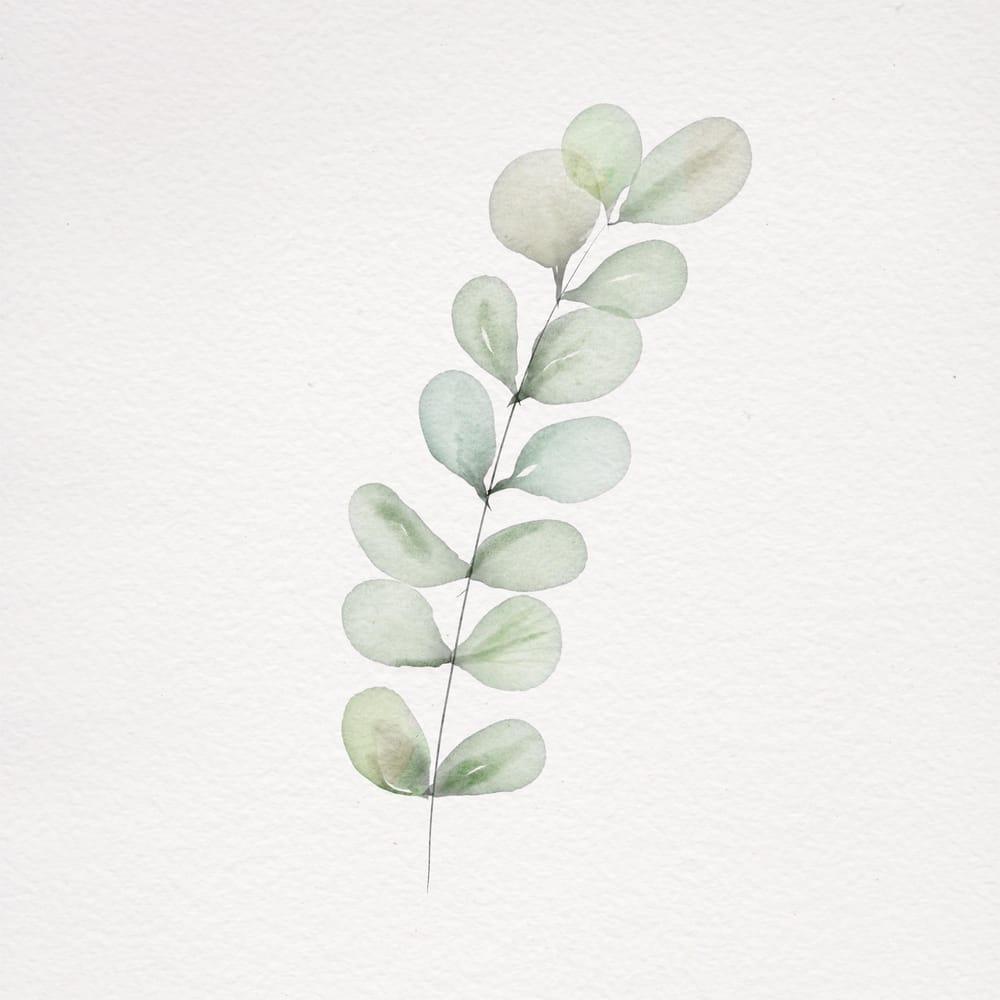 Eucalyptus - image 1 - student project