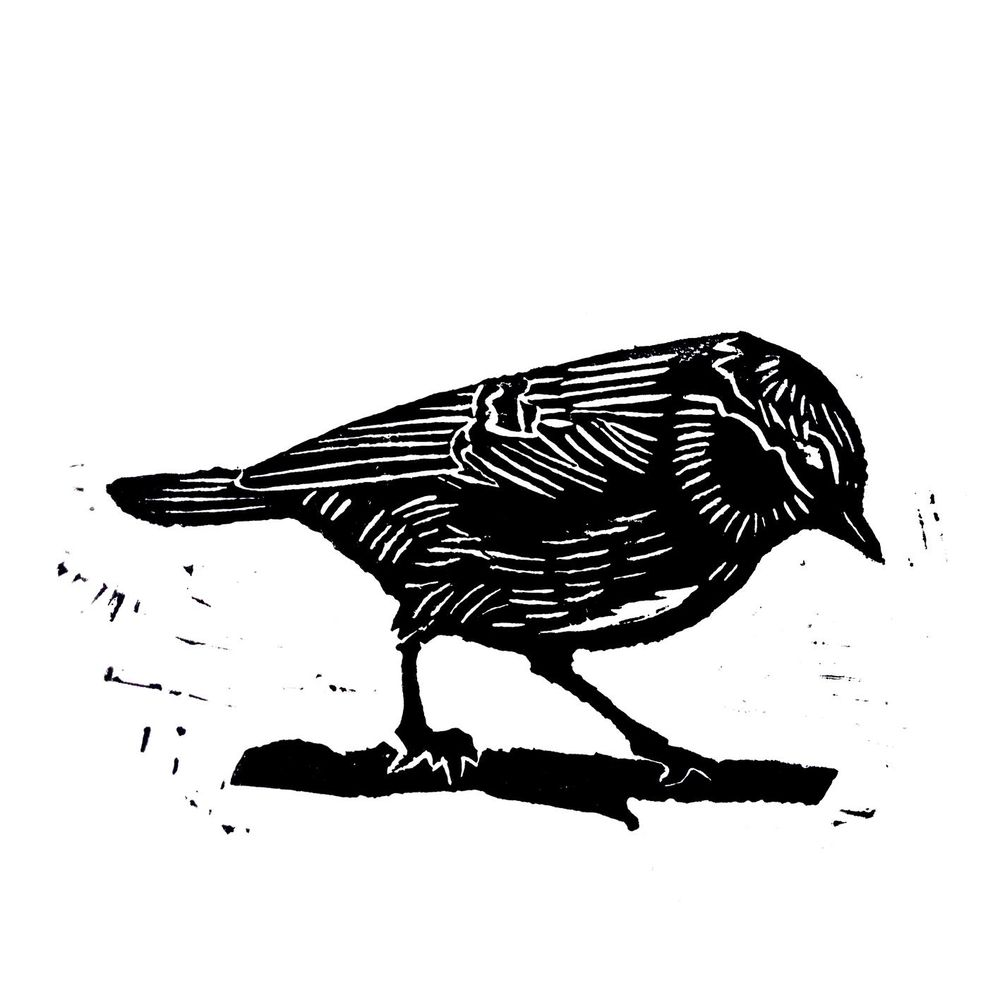 first bird attempt - image 1 - student project