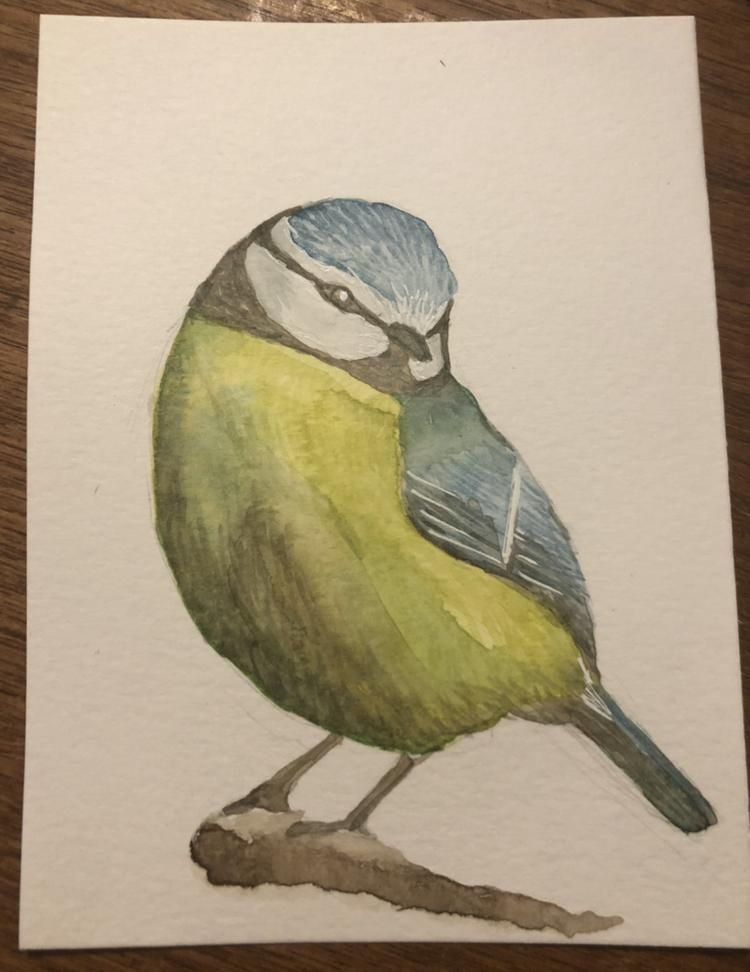 Blue Tit for Watercolor Birds class - image 1 - student project