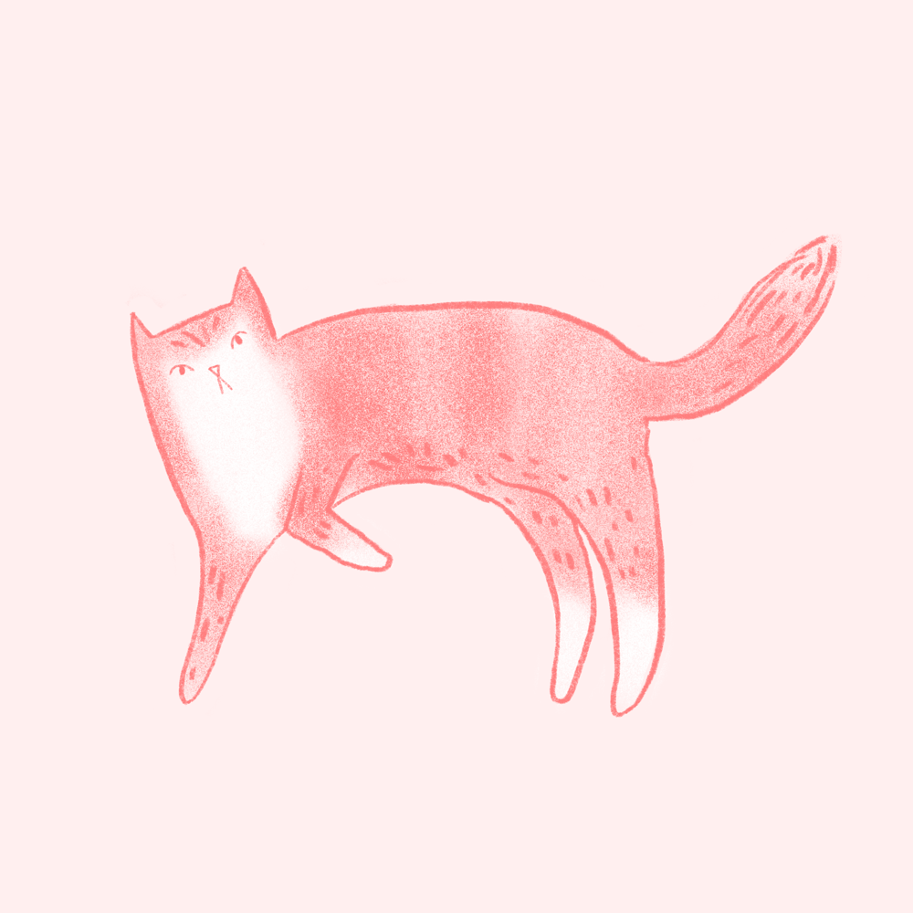 Lazy cat - image 1 - student project