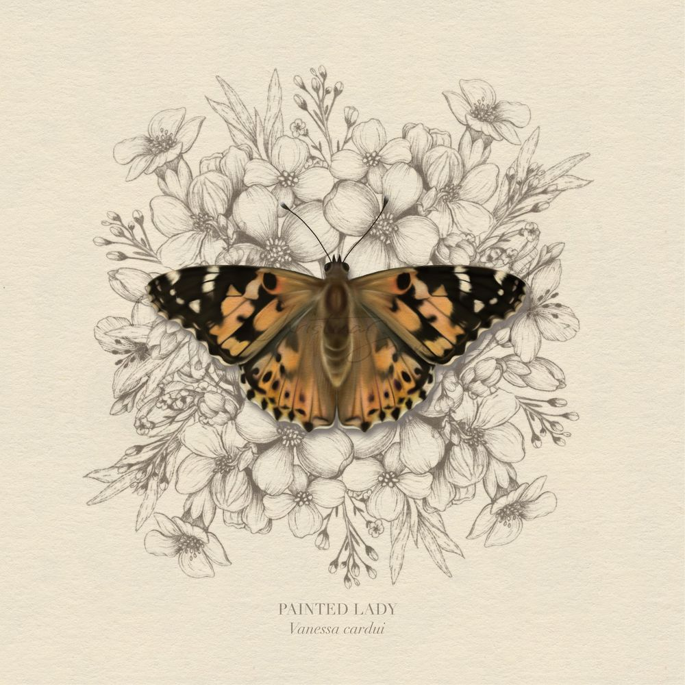 Painted Lady Butterfly and Co - image 1 - student project