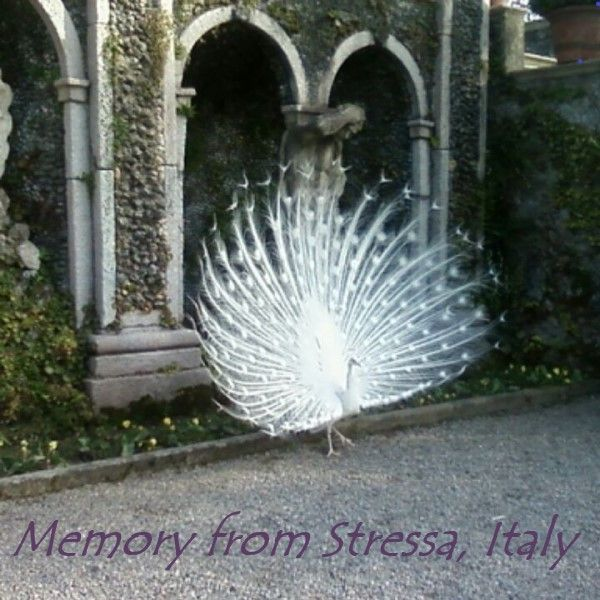 Memories from Stressa, Italy - image 1 - student project
