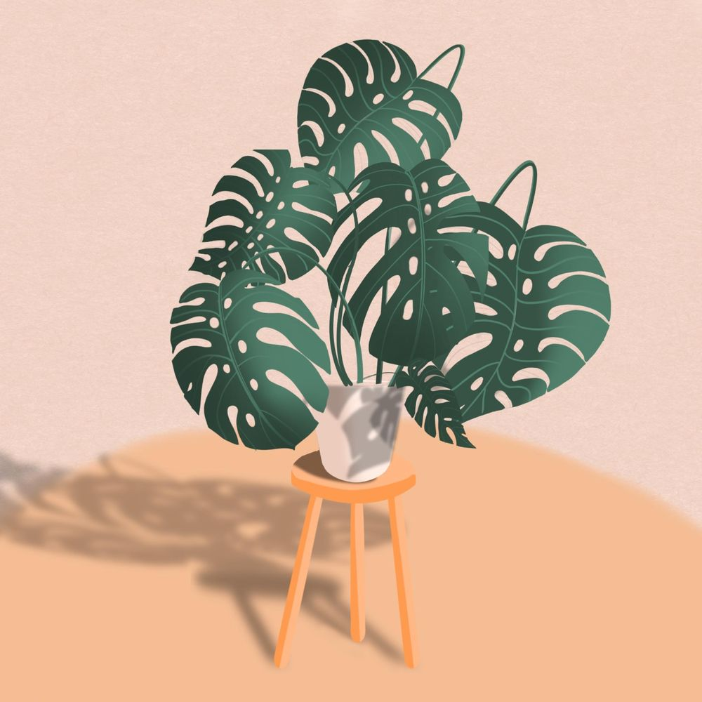 Monstera and Shed - image 1 - student project