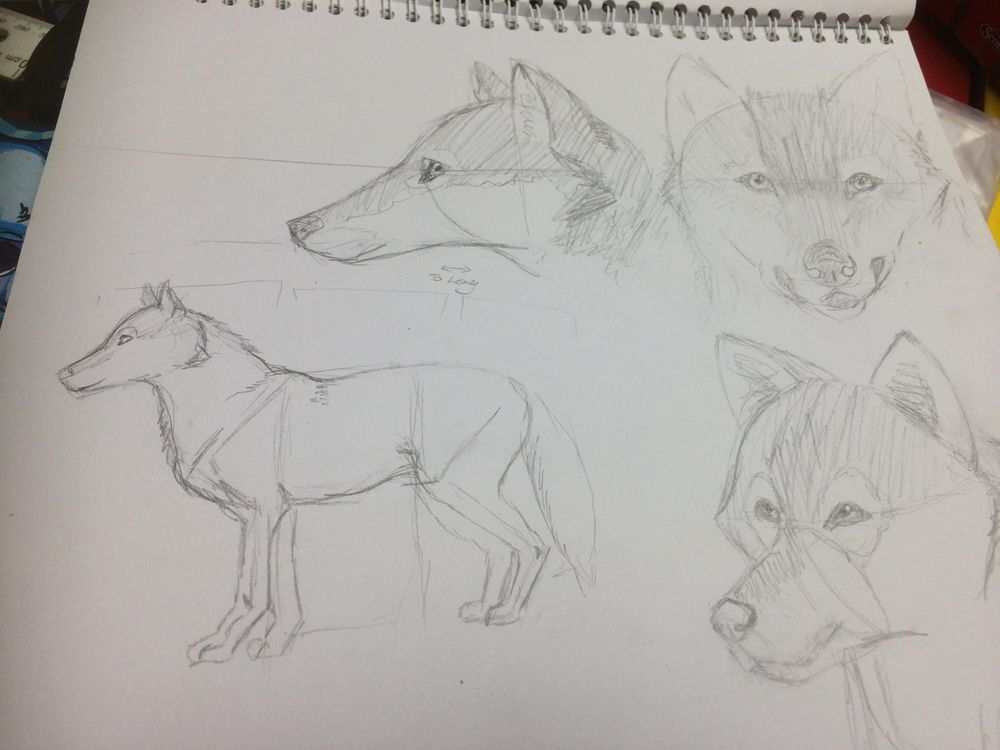 Variety of Animal Drawings - image 1 - student project