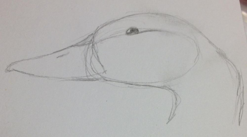 Variety of Animal Drawings - image 5 - student project