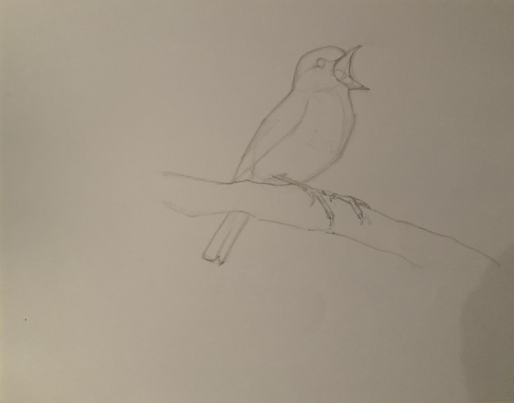Basic skills / Getting started with drawing - exercises - image 5 - student project