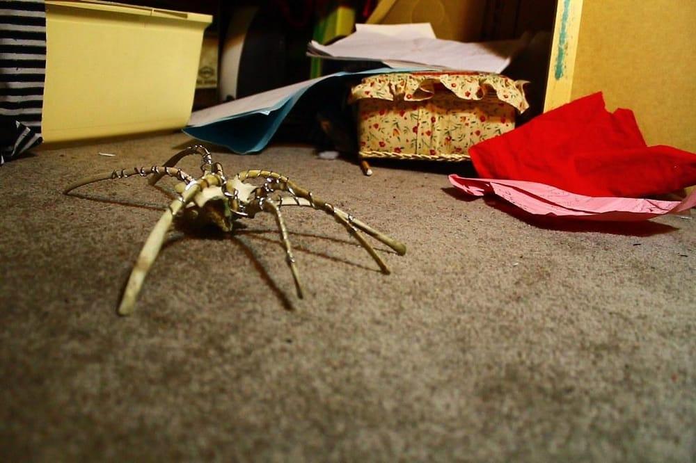 Bone Spider  - image 1 - student project