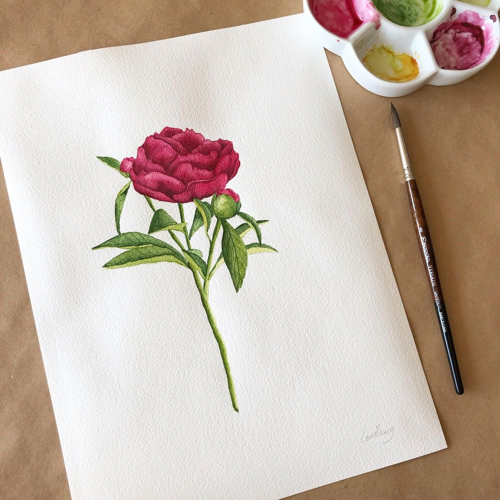 Watercolor peony - image 1 - student project