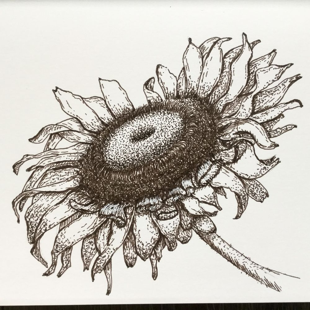 My sunflower - image 1 - student project