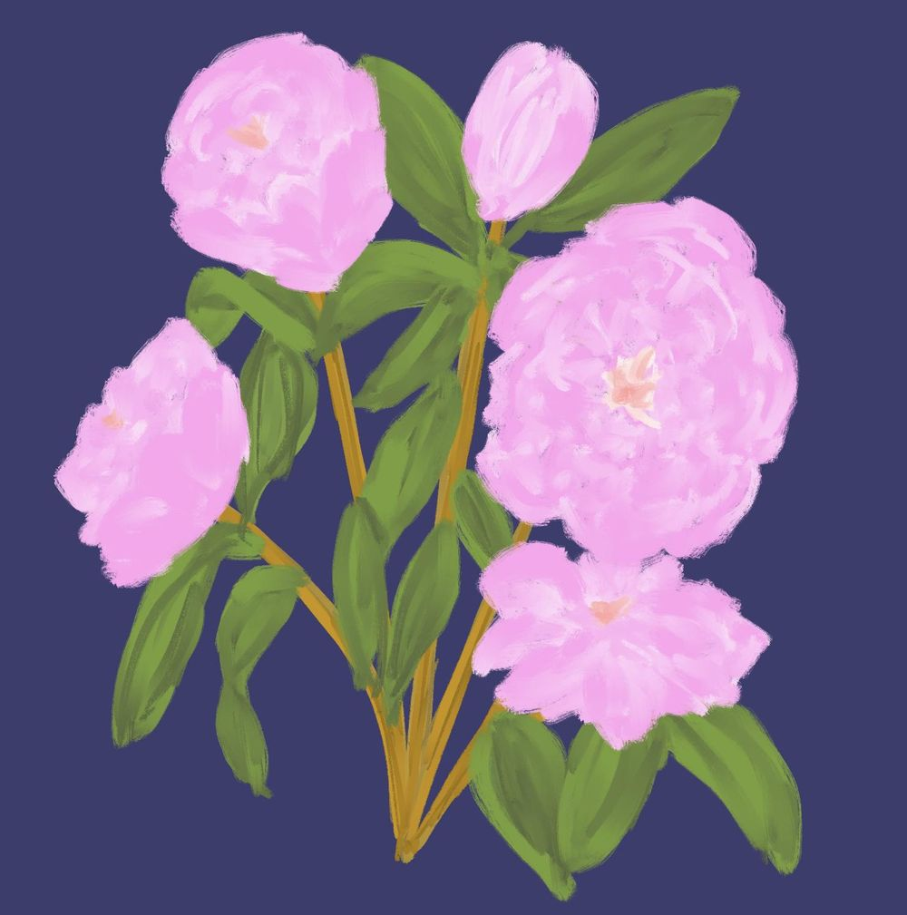 Peonies in pink - image 1 - student project