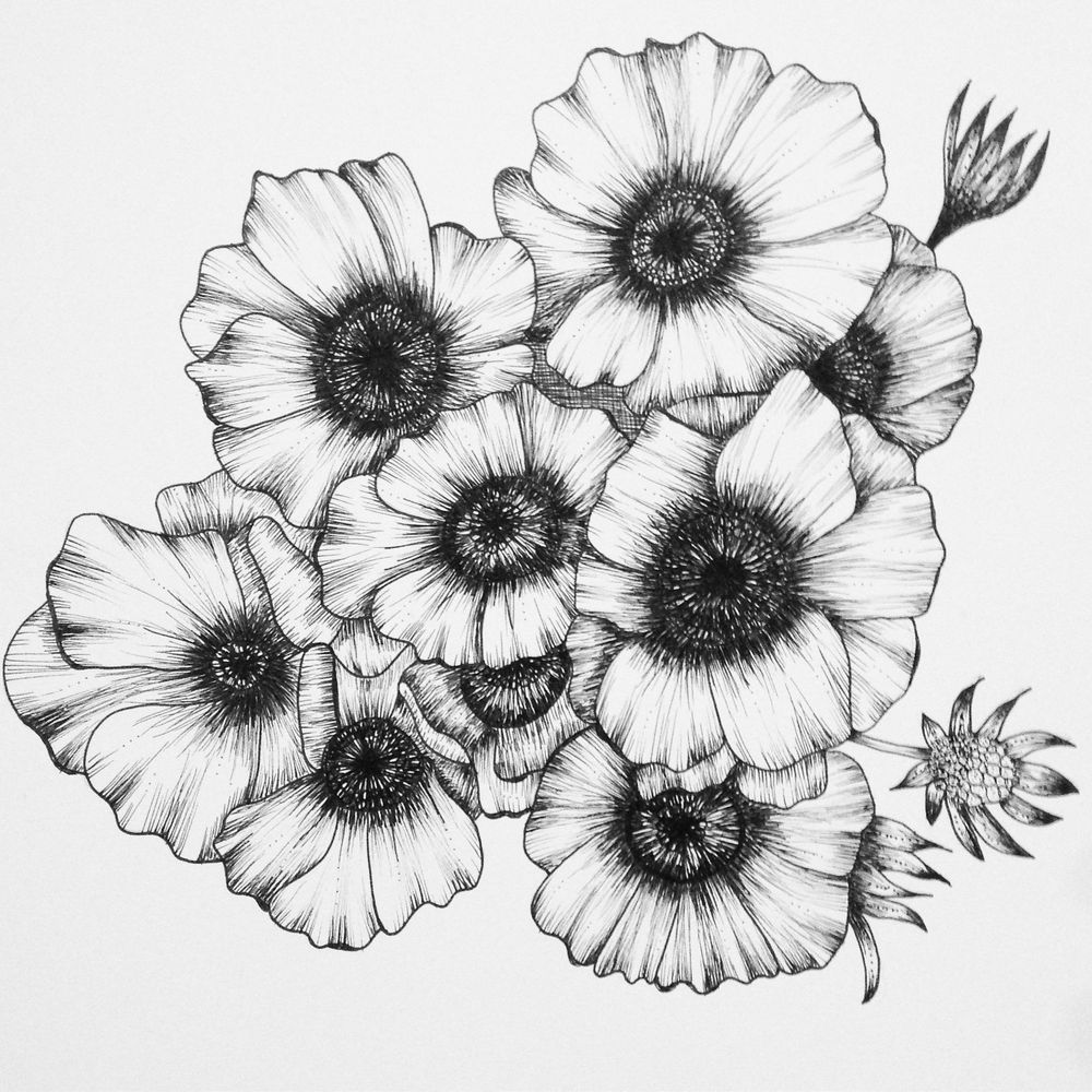 Penned Waterlilies + Poppies - image 6 - student project