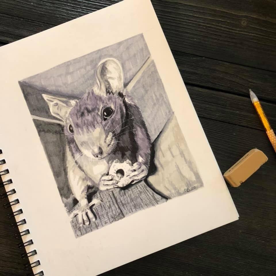 Rattie Portraits <3 - image 2 - student project