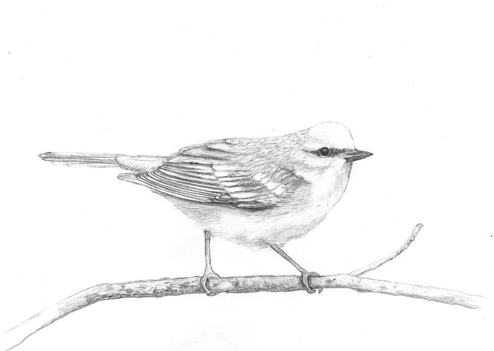 Pretty Little Birdie - image 2 - student project