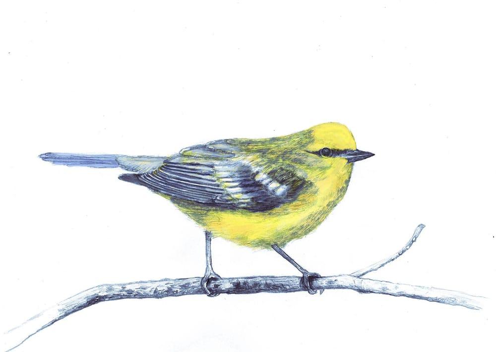 Pretty Little Birdie - image 3 - student project