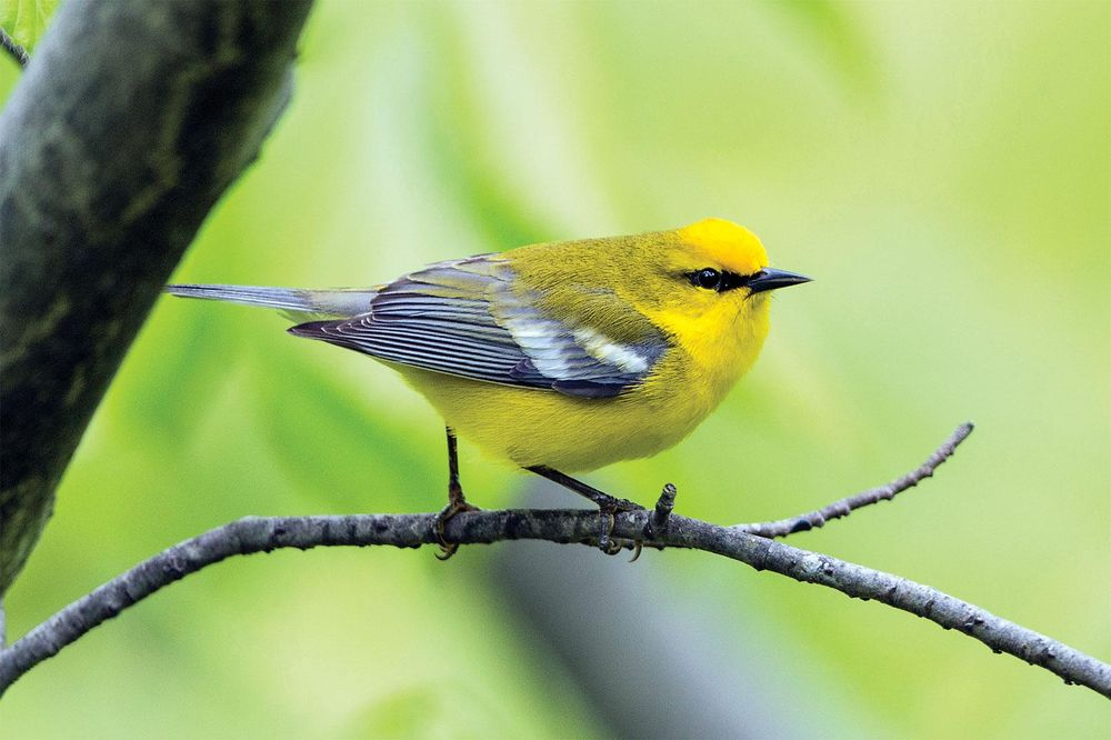 Pretty Little Birdie - image 1 - student project