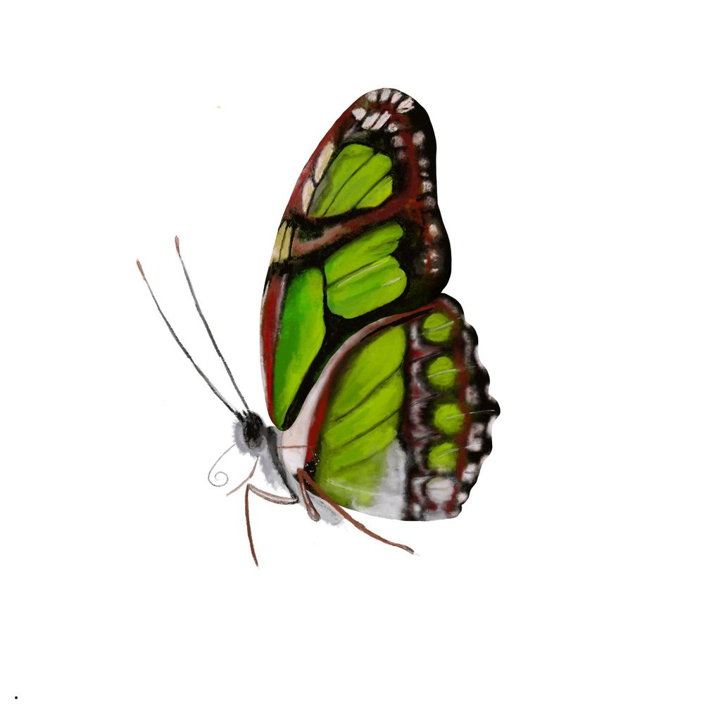 Old World Swallowtail - image 2 - student project