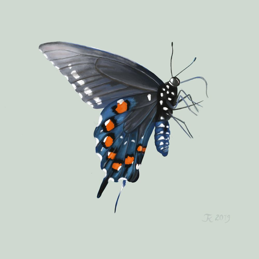 Old World Swallowtail - image 1 - student project