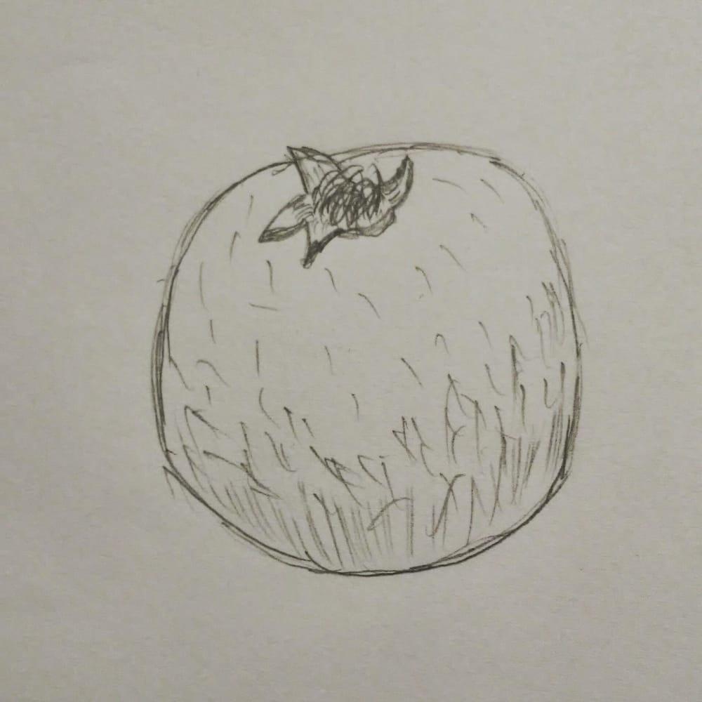 Pomegranate illustration - image 2 - student project