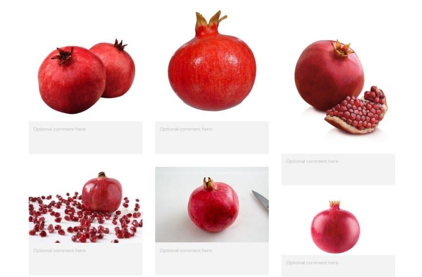 Pomegranate illustration - image 1 - student project
