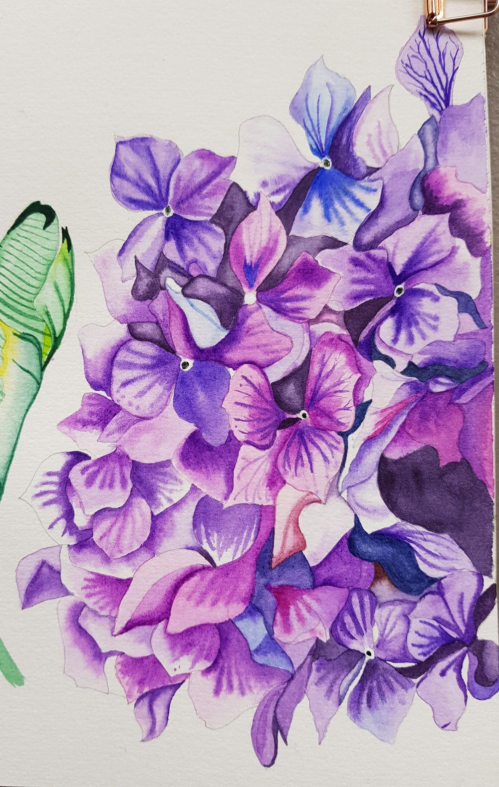 Watercolor Hydrangea - image 1 - student project
