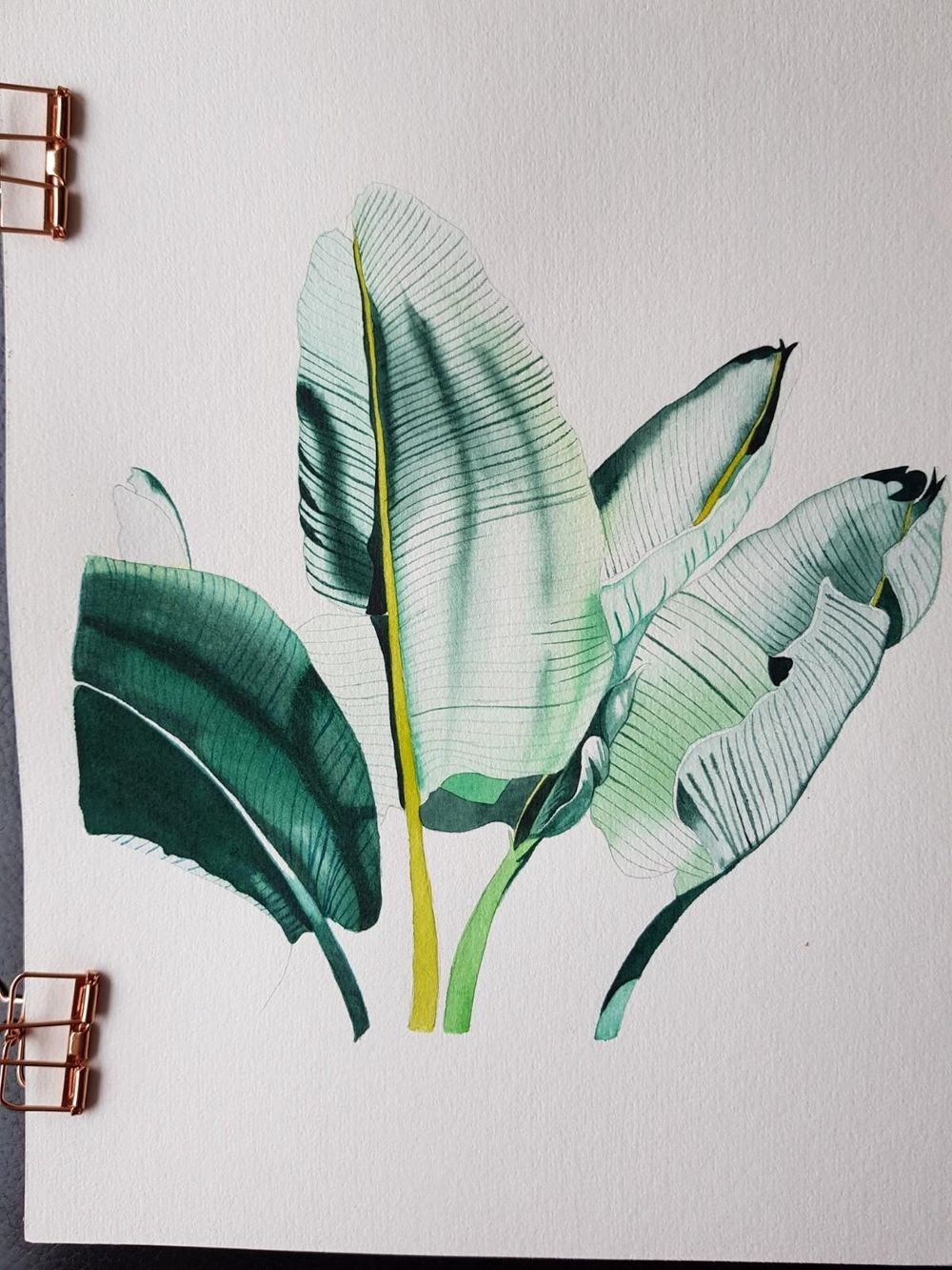 Banana Leaves - image 2 - student project