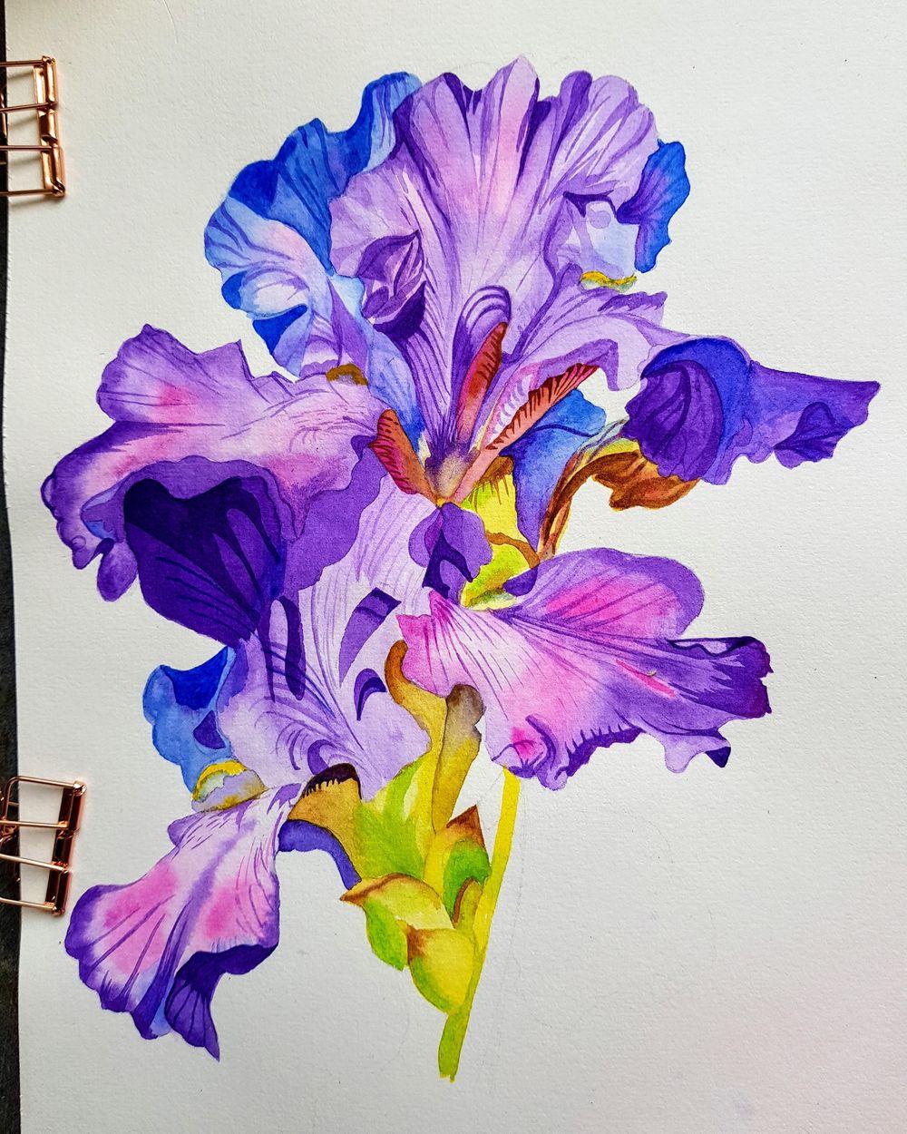 Iris flower - image 1 - student project