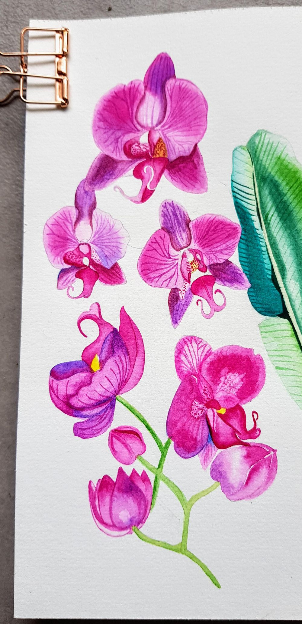 Orchids watercolours - image 2 - student project