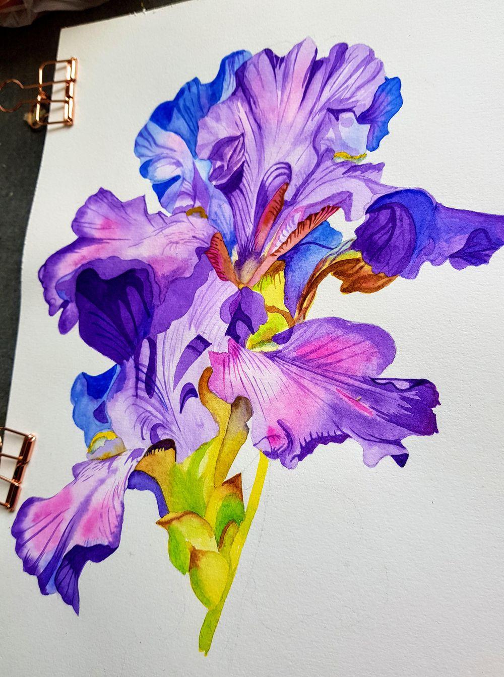 Iris flower - image 2 - student project