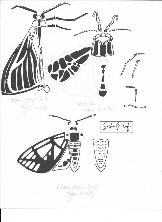 Moths! - image 1 - student project