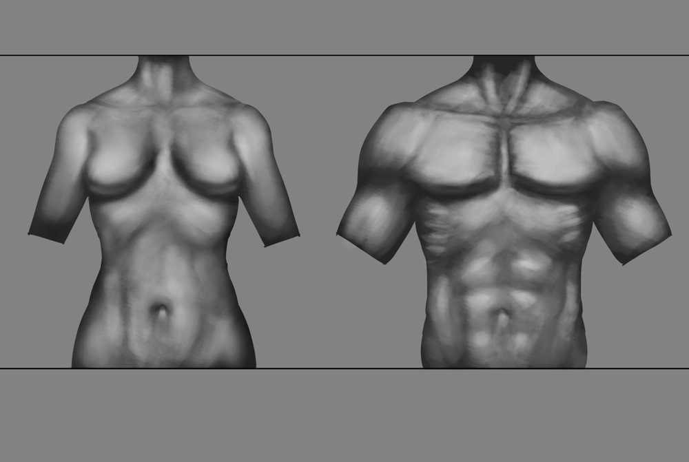 Anatomy Drawing - image 5 - student project
