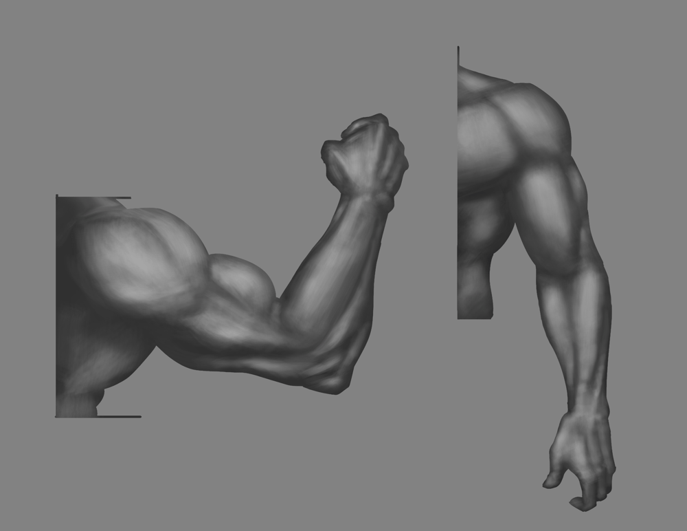 Anatomy Drawing - image 7 - student project