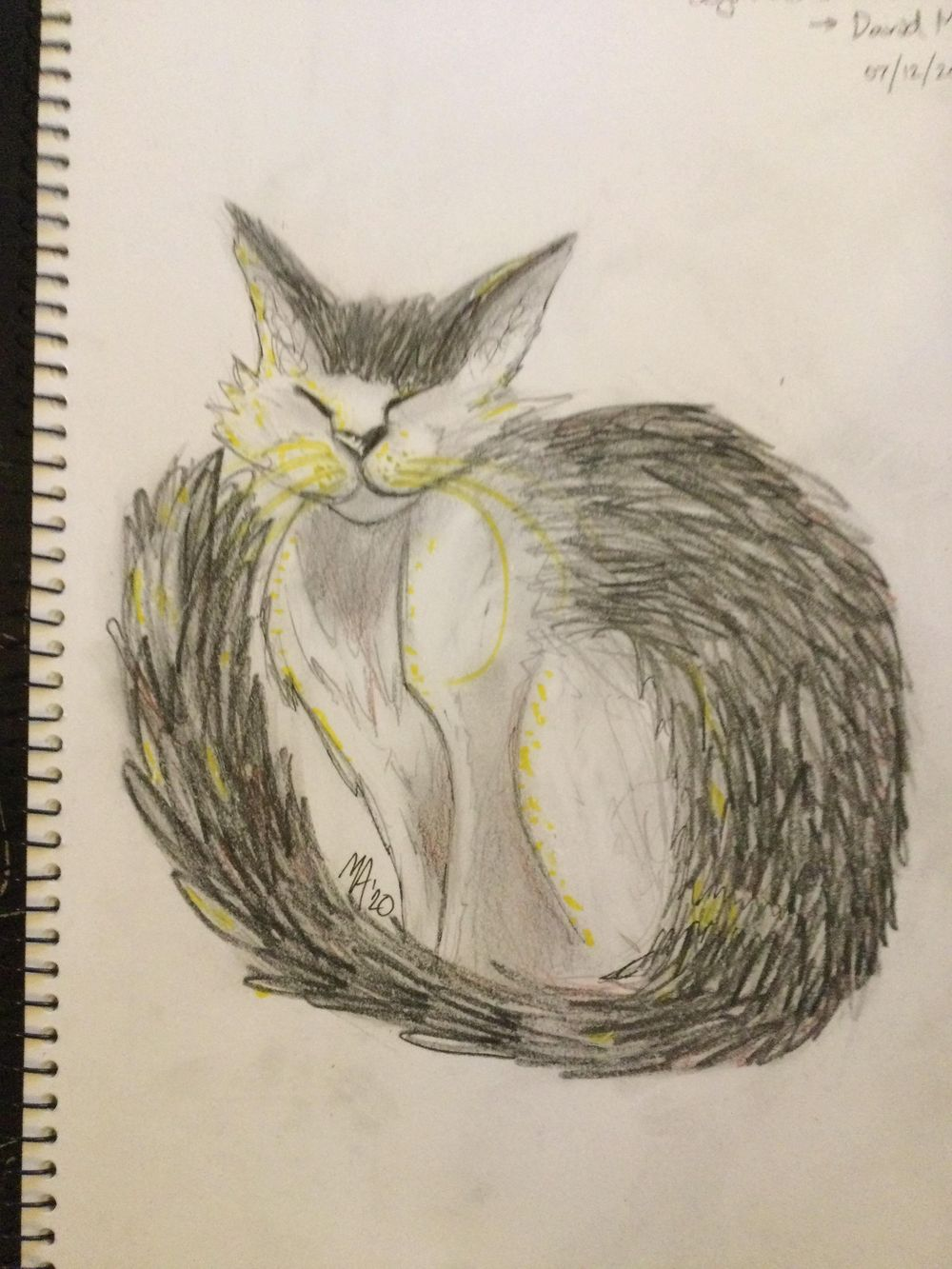 Expressive Drawing - Old Cat - image 1 - student project