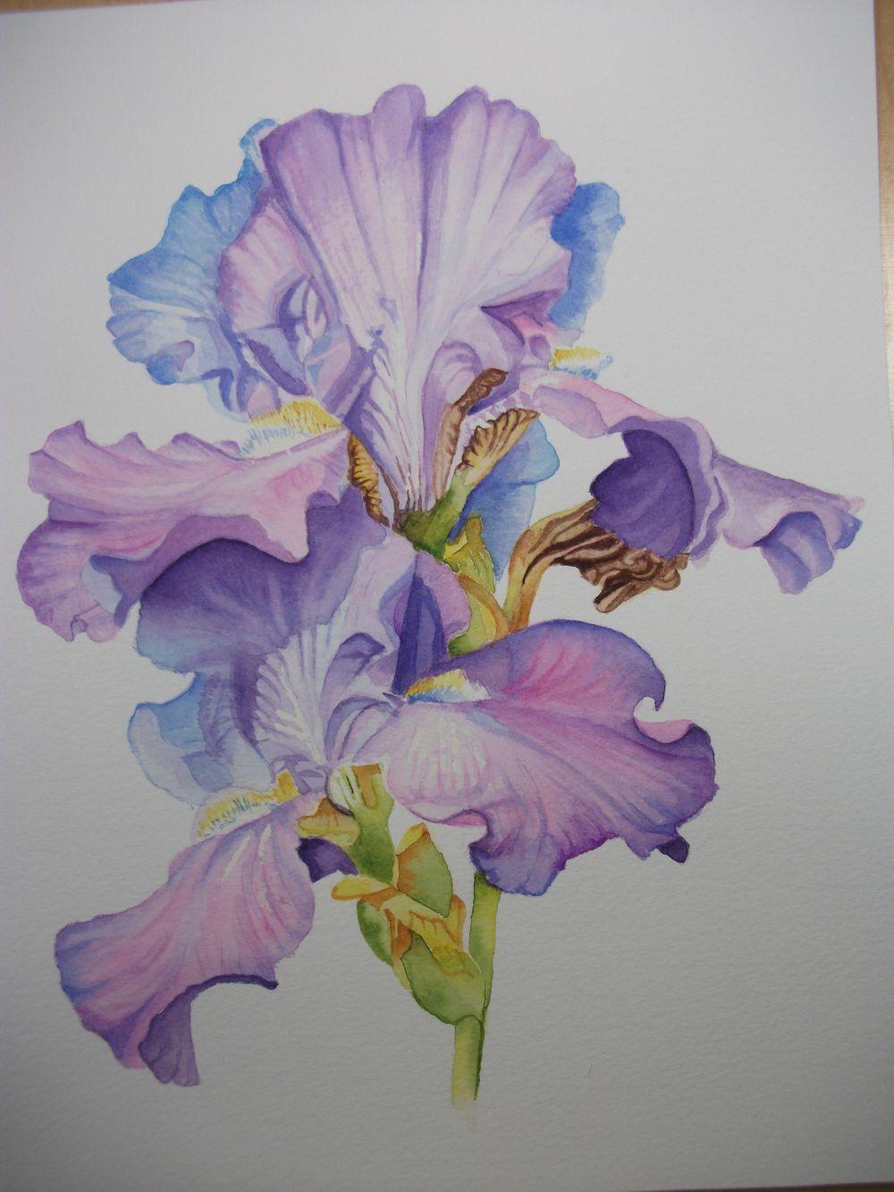 Debbie's Iris - image 1 - student project