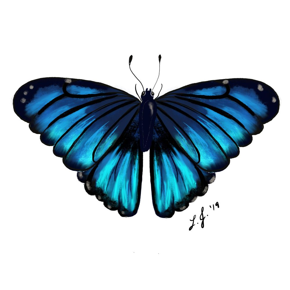 Monarch and Blue Morpho Butterflies in ProCreate - image 1 - student project