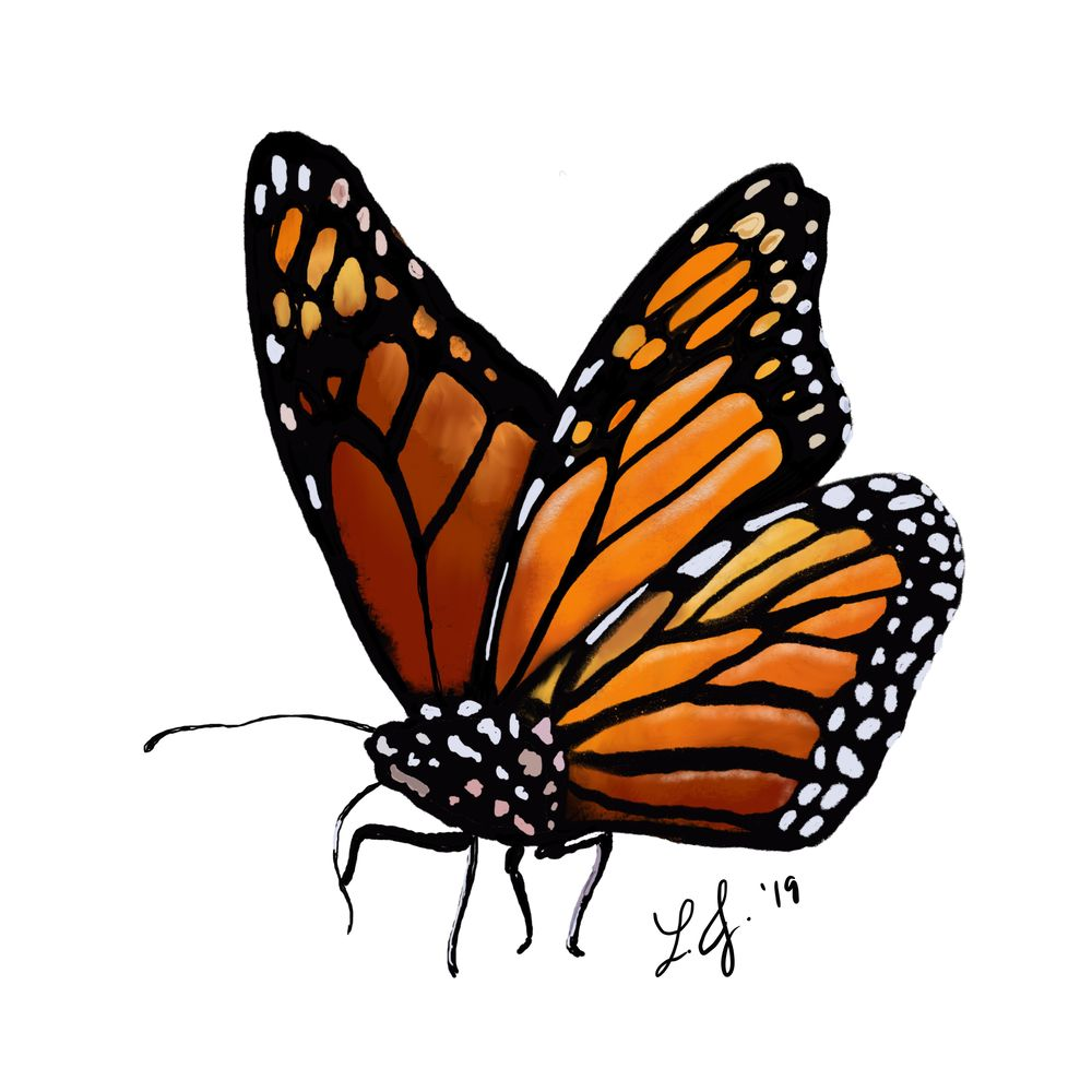 Monarch and Blue Morpho Butterflies in ProCreate - image 2 - student project