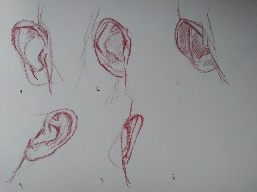 Drawing the head 2 - image 3 - student project