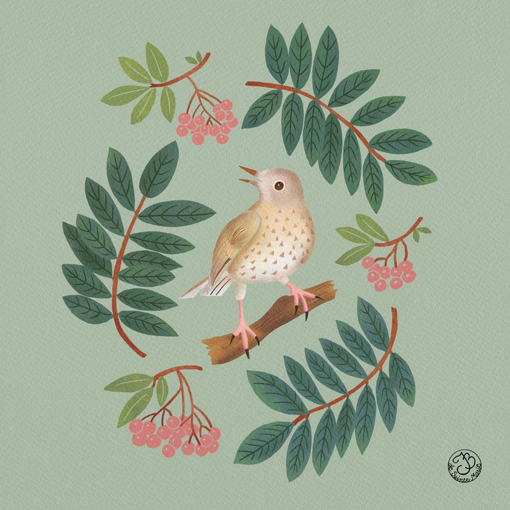 A thrush with mountain ash - image 1 - student project