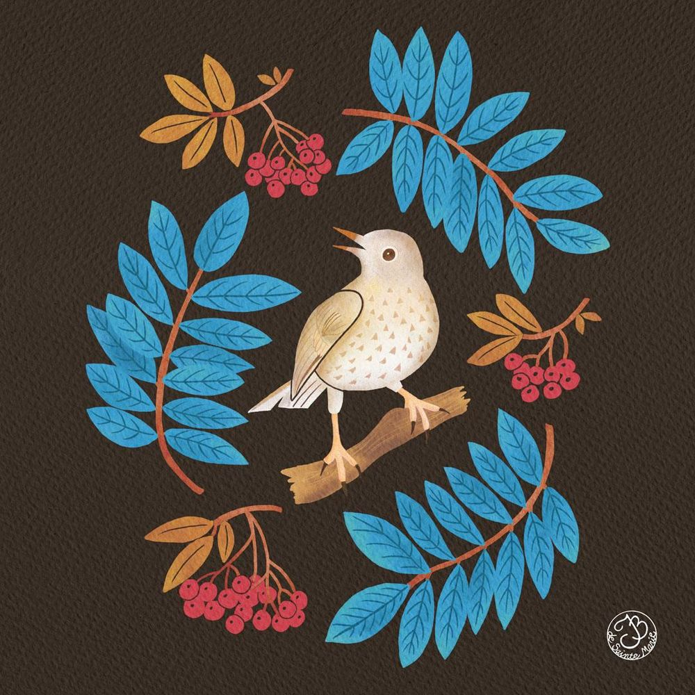 A thrush with mountain ash - image 3 - student project