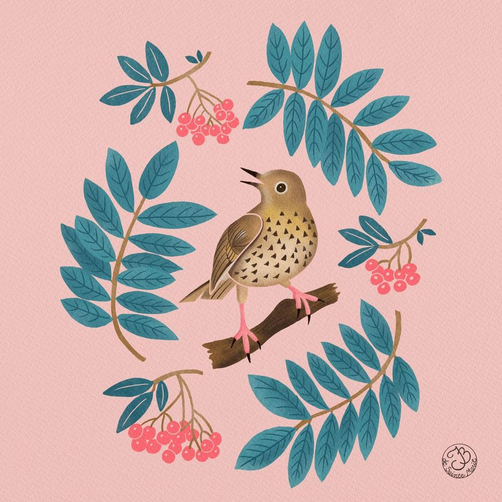 A thrush with mountain ash - image 4 - student project