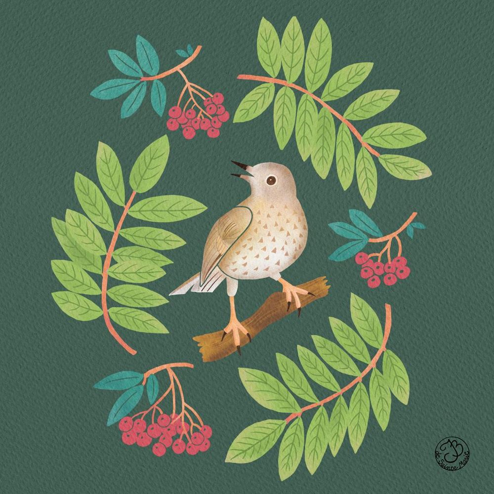 A thrush with mountain ash - image 2 - student project
