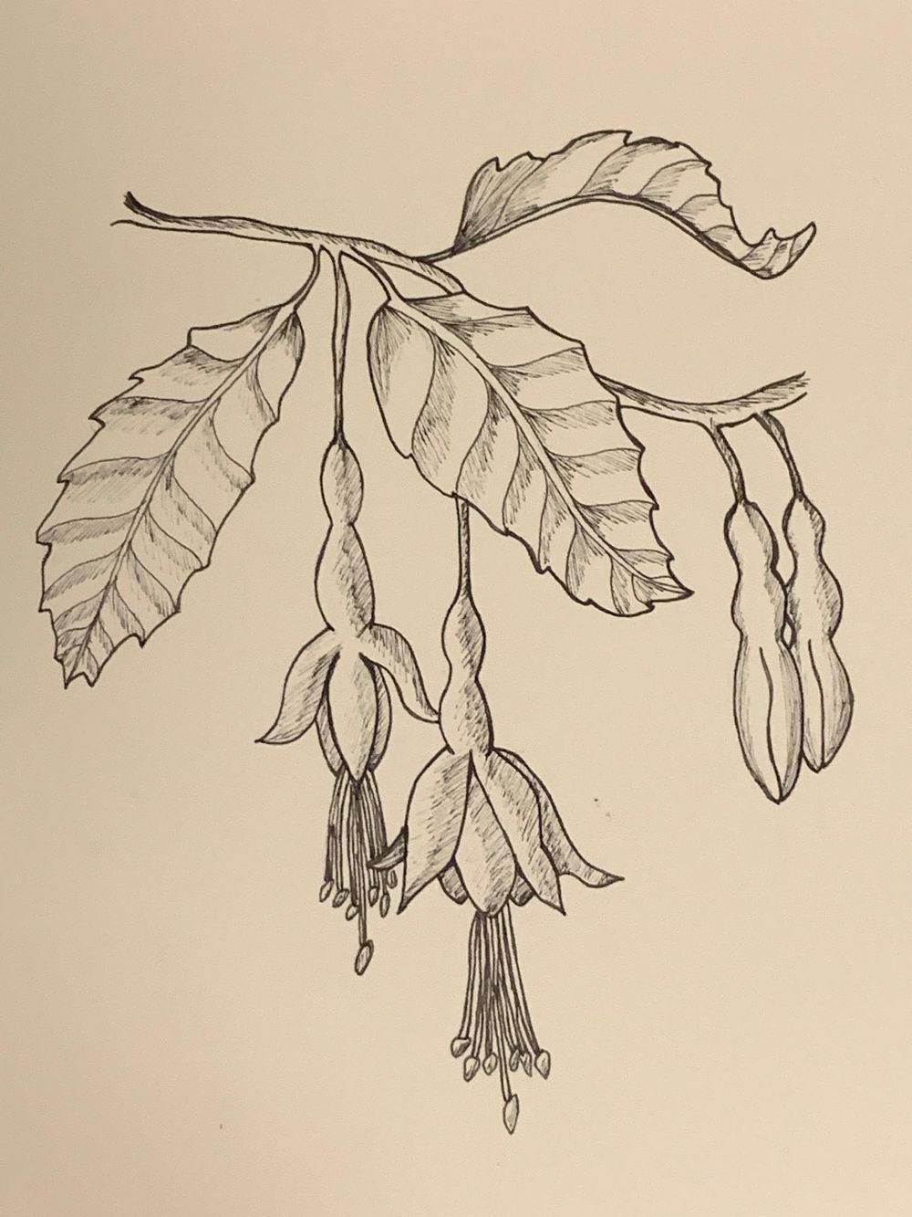 Flower drawing - image 1 - student project