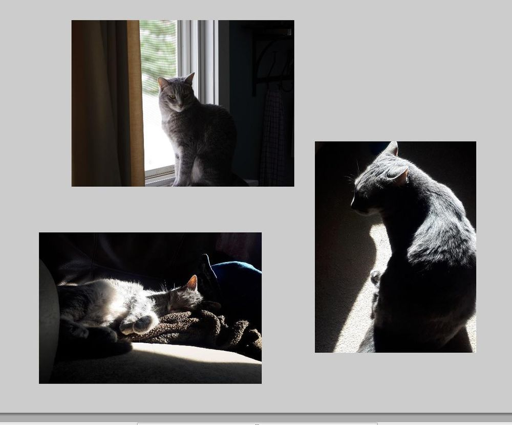 Cat & light as a metaphor - image 1 - student project