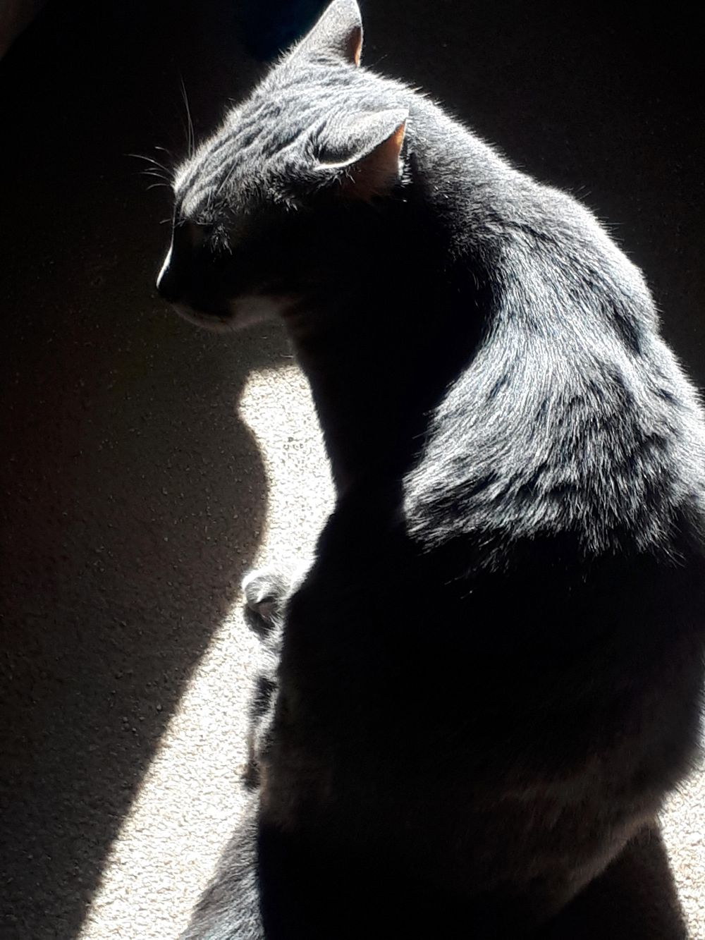 Cat & light as a metaphor - image 4 - student project