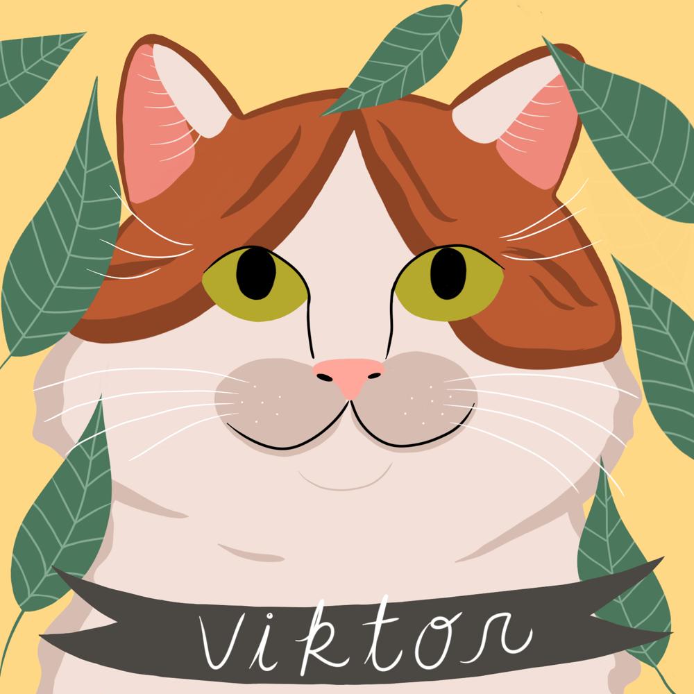 My cat Viktor - image 1 - student project