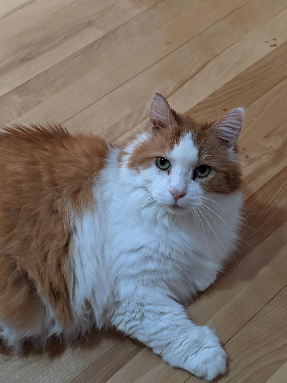 My cat Viktor - image 2 - student project