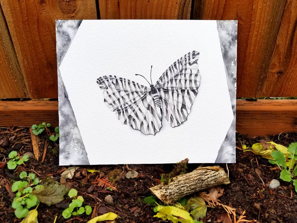 Butterfly - image 1 - student project