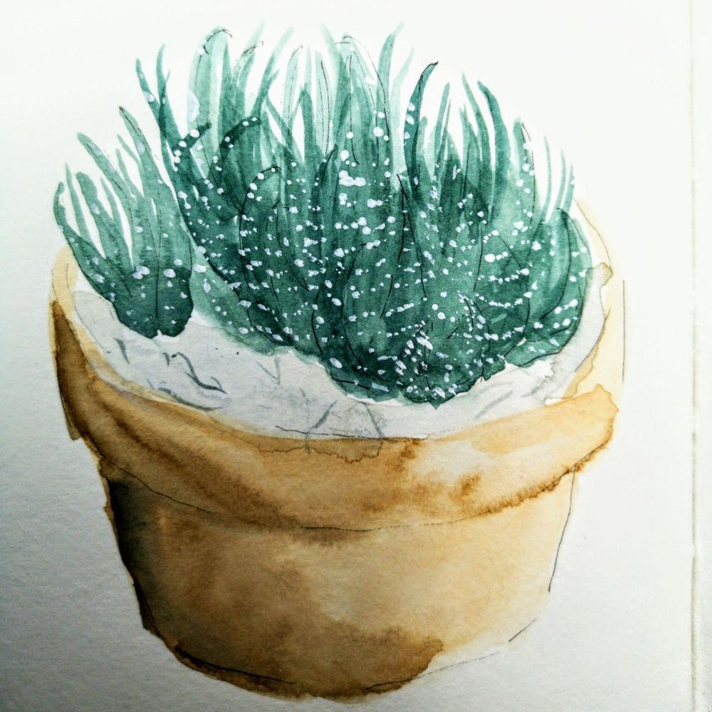 House plants and flowers - image 11 - student project