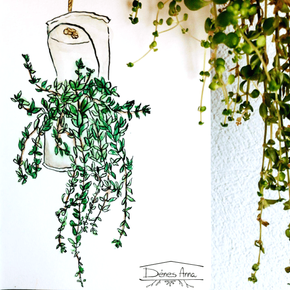 House plants and flowers - image 16 - student project