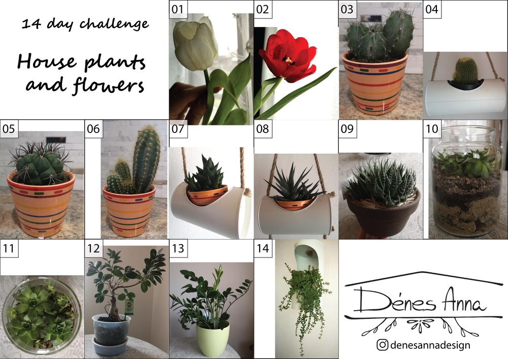 House plants and flowers - image 2 - student project
